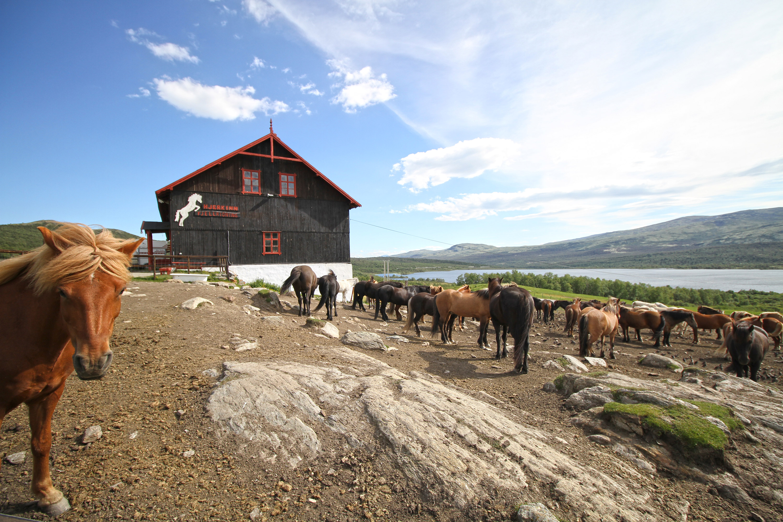 Hjerkinn camping Norvège