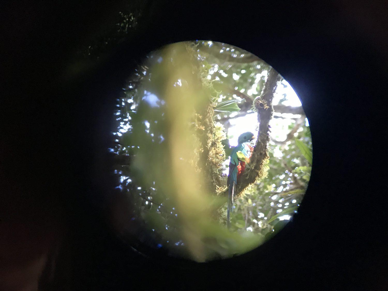quetzal monteverde costa rica