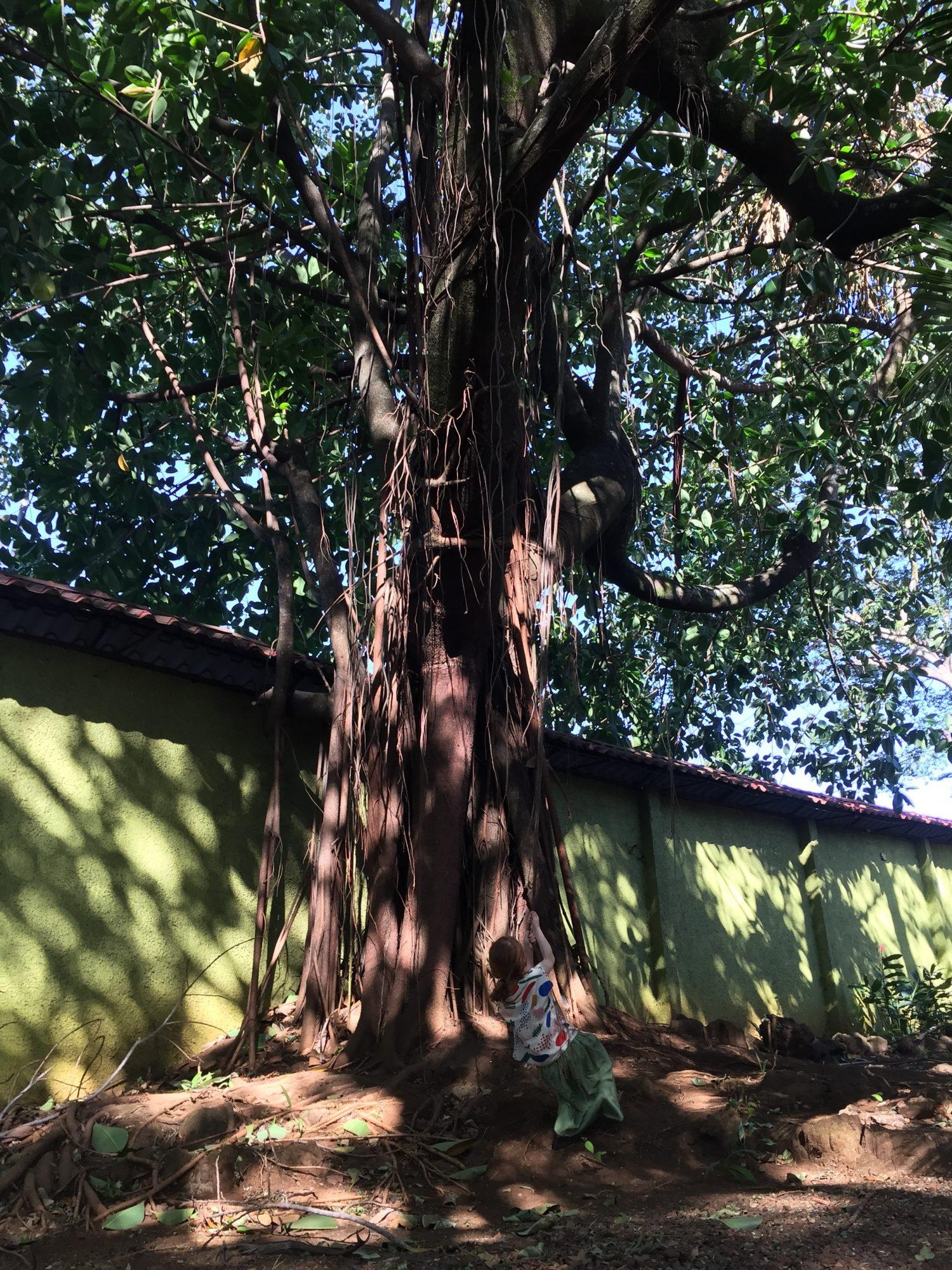 Végétation au costa rica à la villa san ignacio alajuela