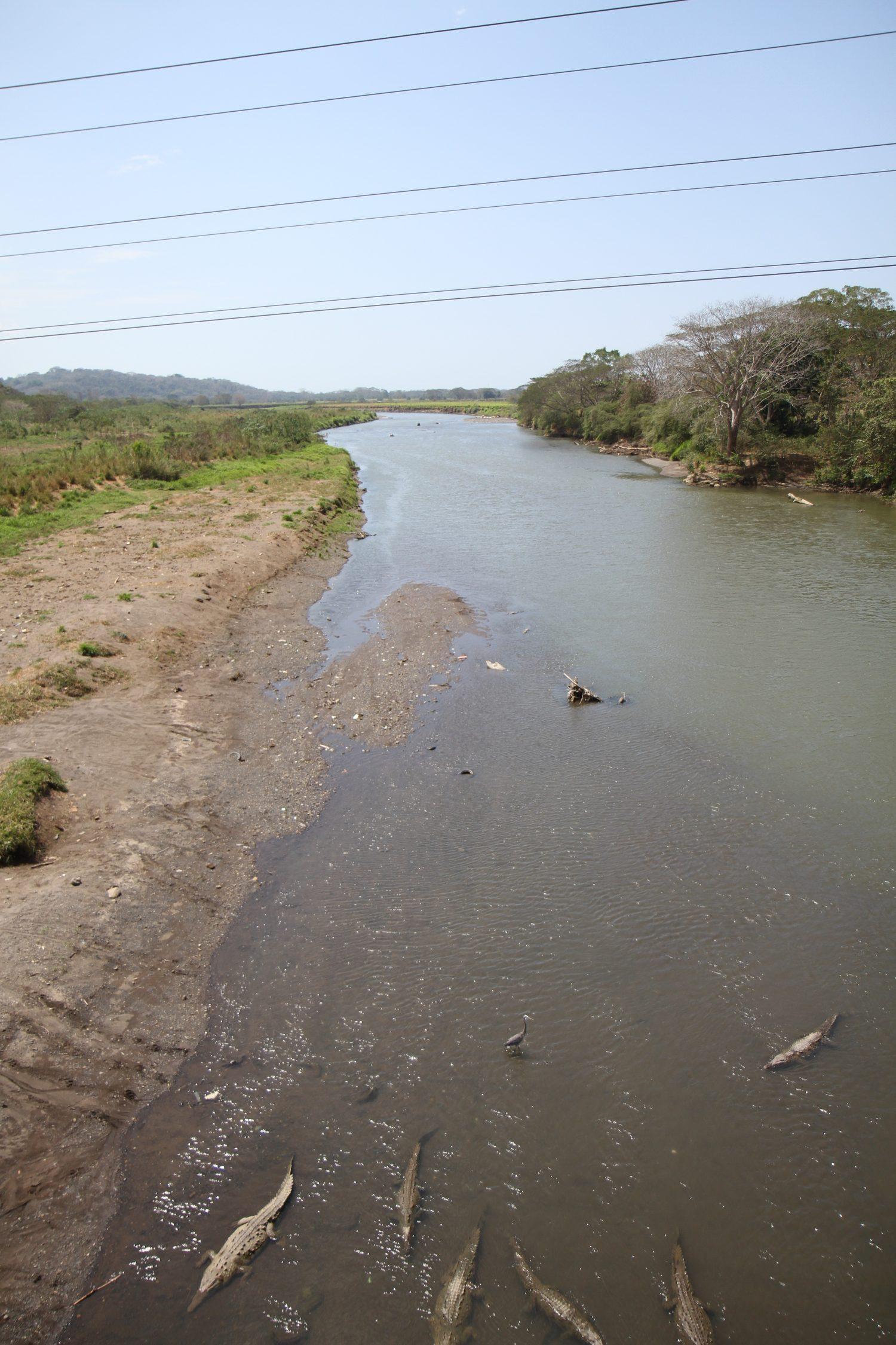 crocodiles tarcoles costa rica