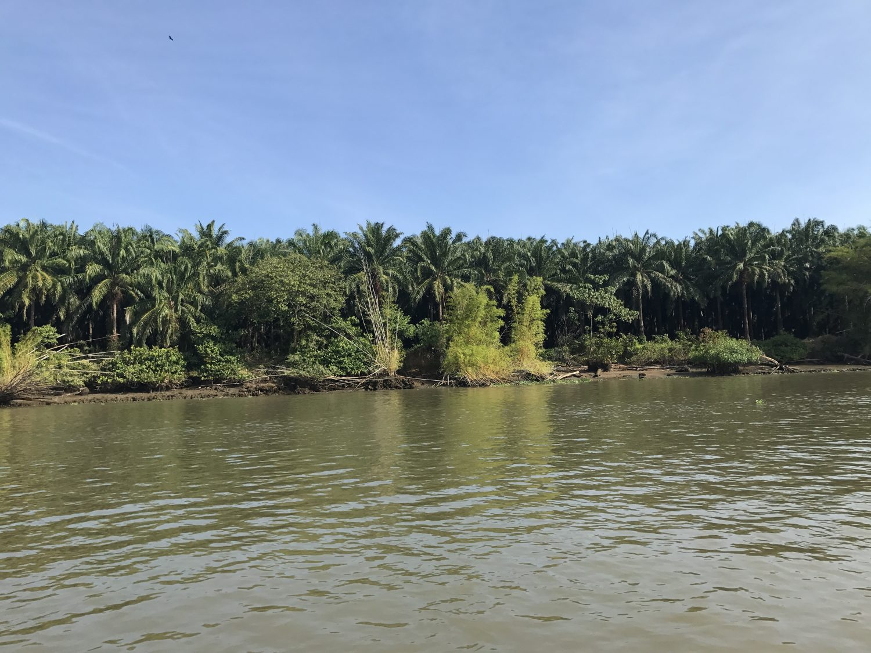 mangrove sierpe costa rica