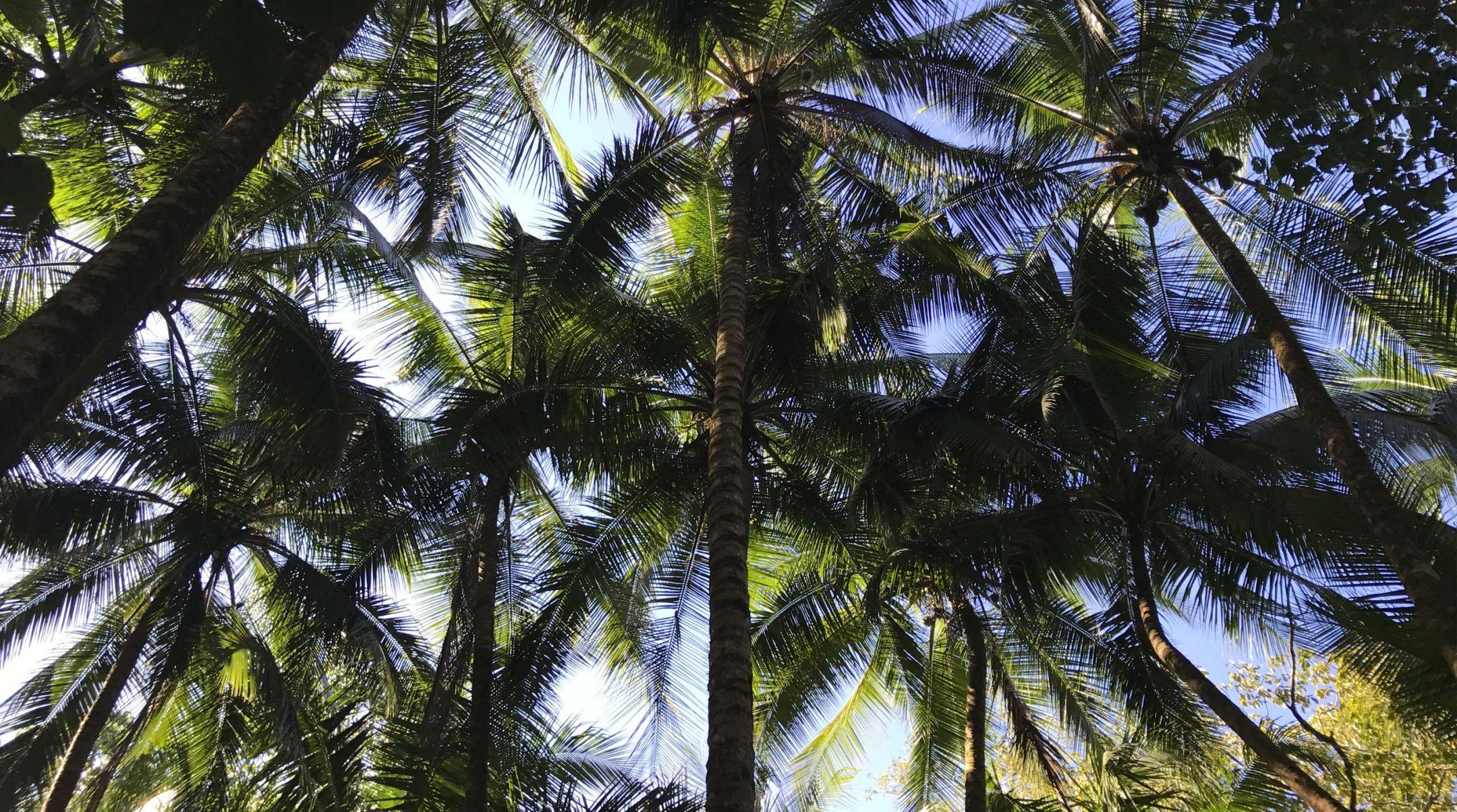 Vidéo de notre voyage au Costa Rica