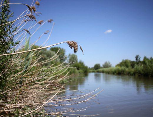 Au fil de l'eau : le marais audomarois