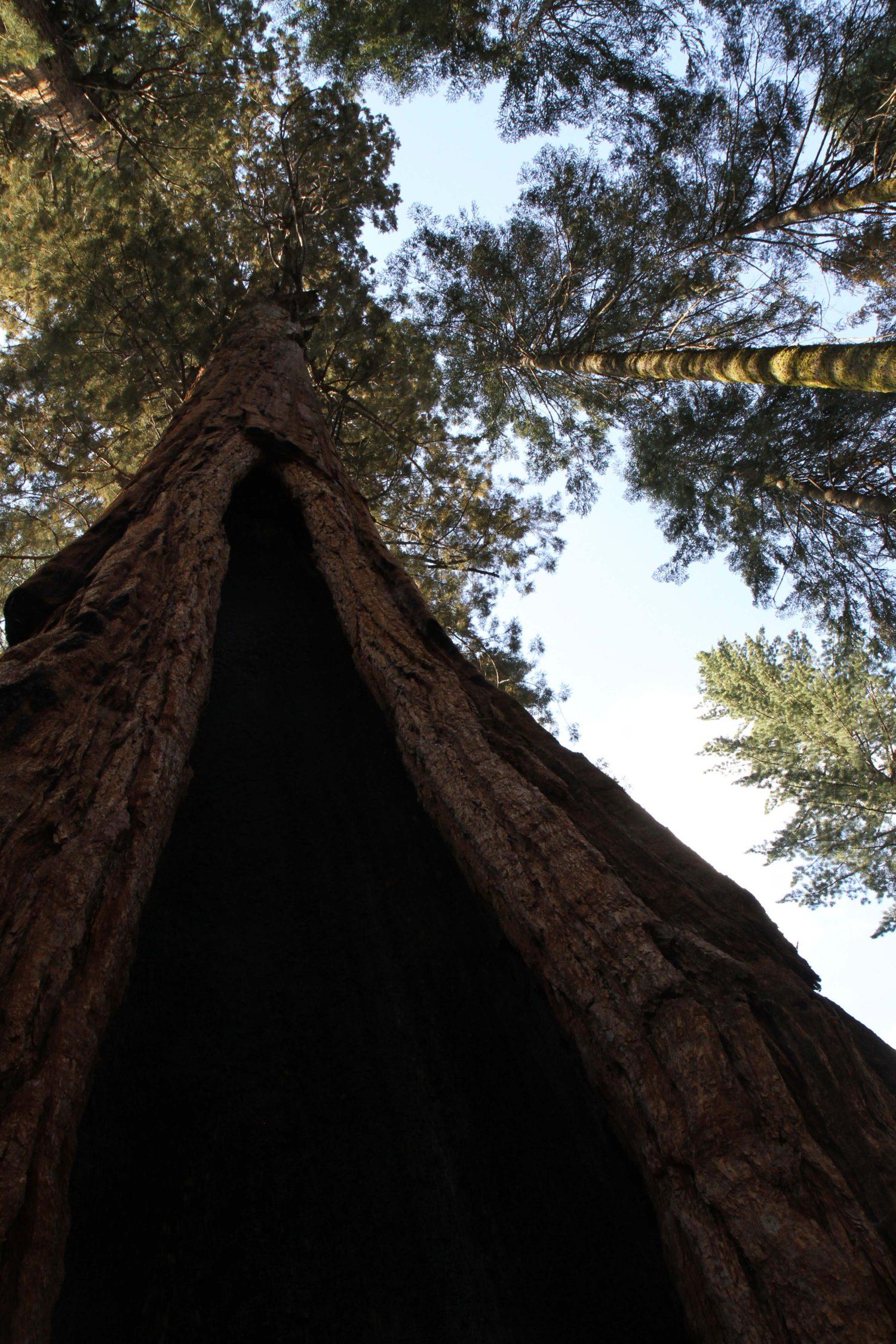 sequoia parc