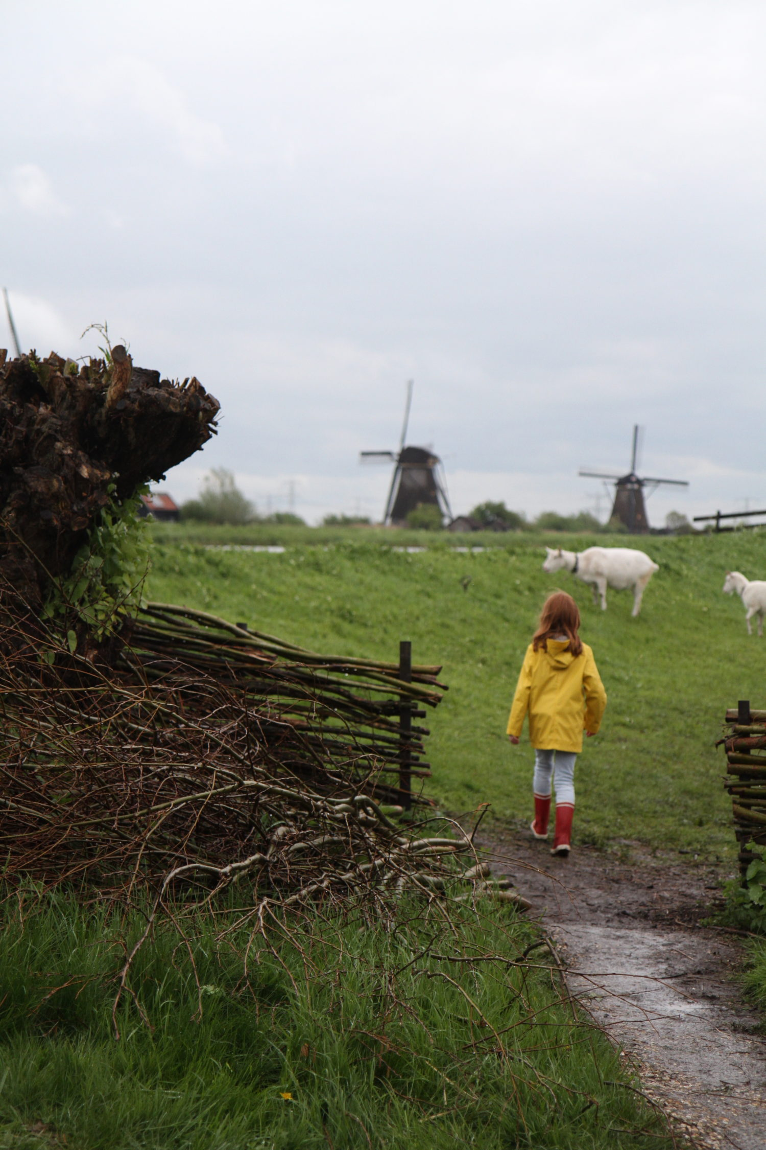 hollande kinderdijk
