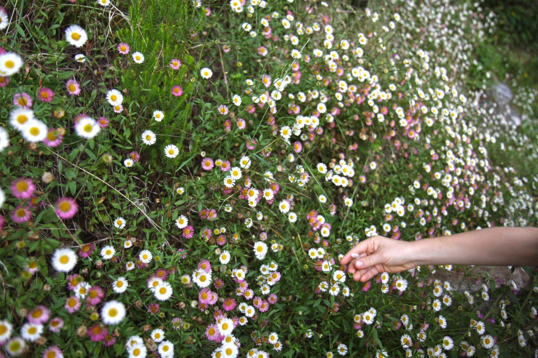 fleurs madère