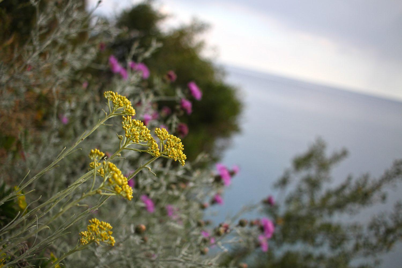 positano fleurs