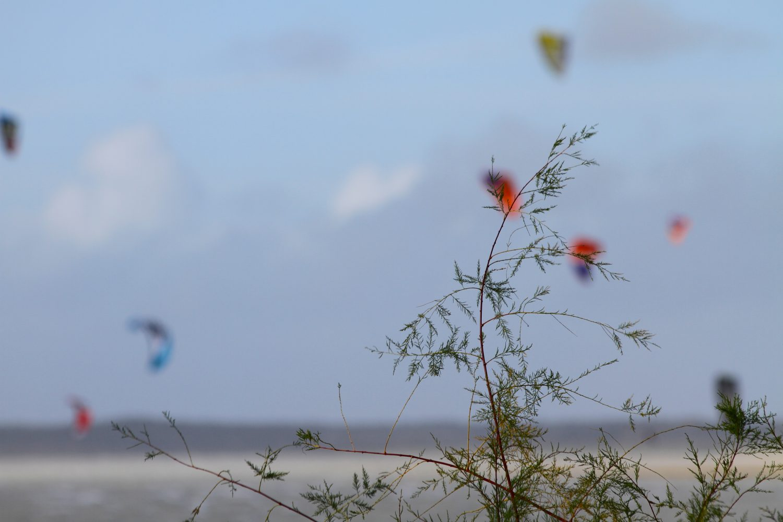 kite en baie de somme