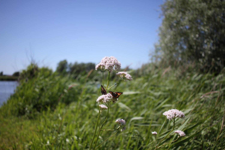 réserve naturelle du romelaere
