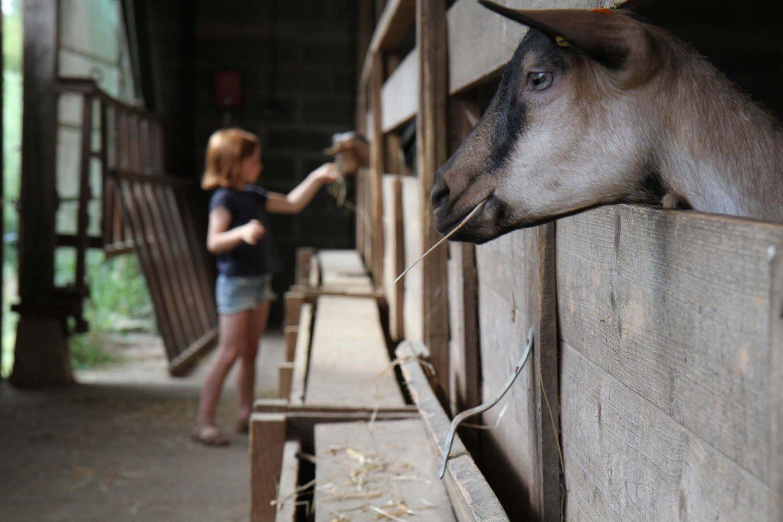 ferme de la Hutte chèvrerie