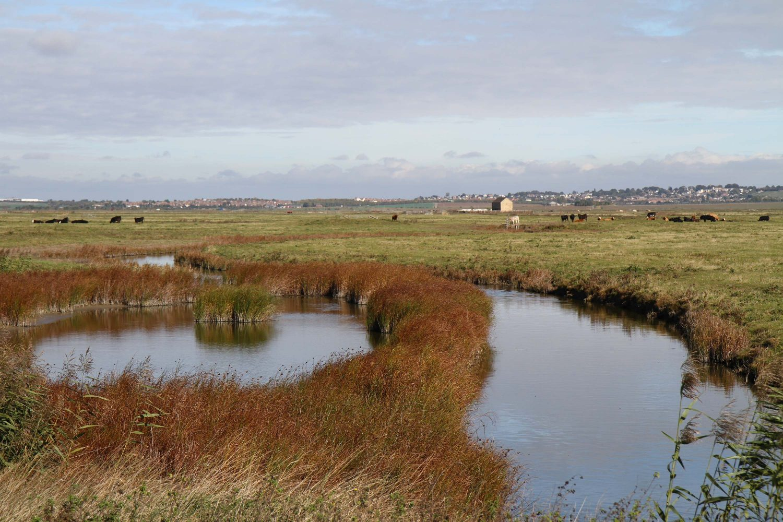 reserve naturelle de elmley kent