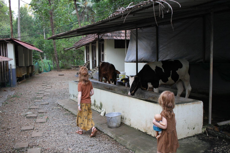 dewalokam organic farm