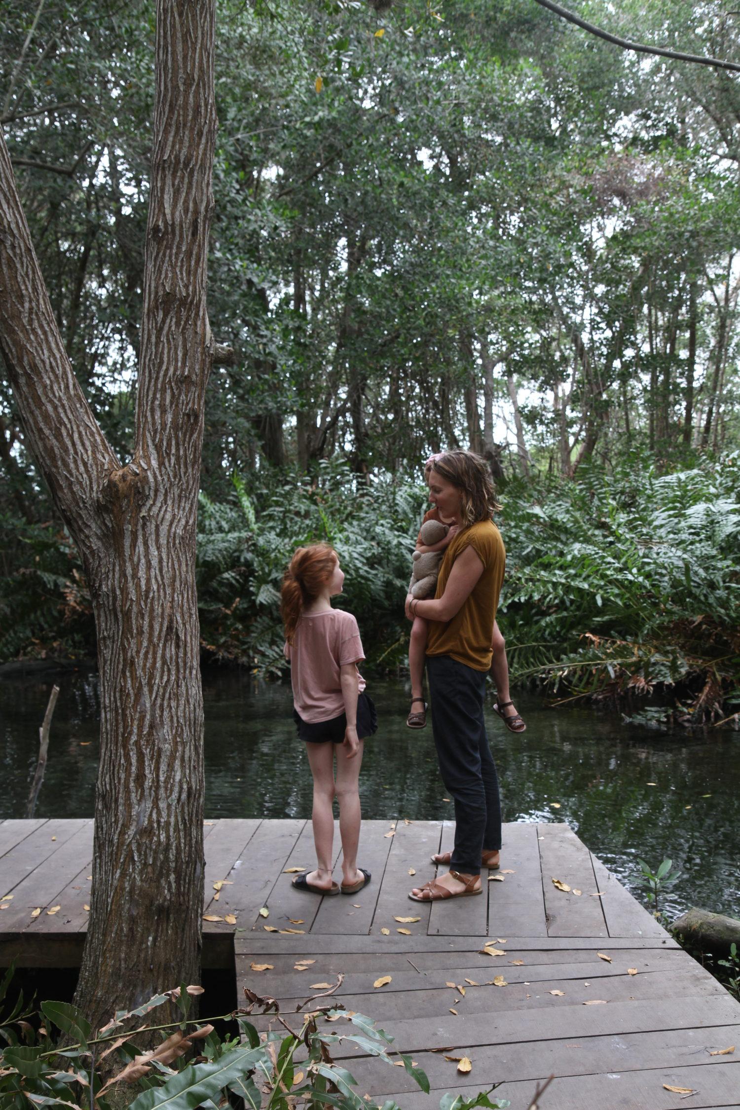 Mangrove,Réserve naturelle de Celestun, Ojo de agua