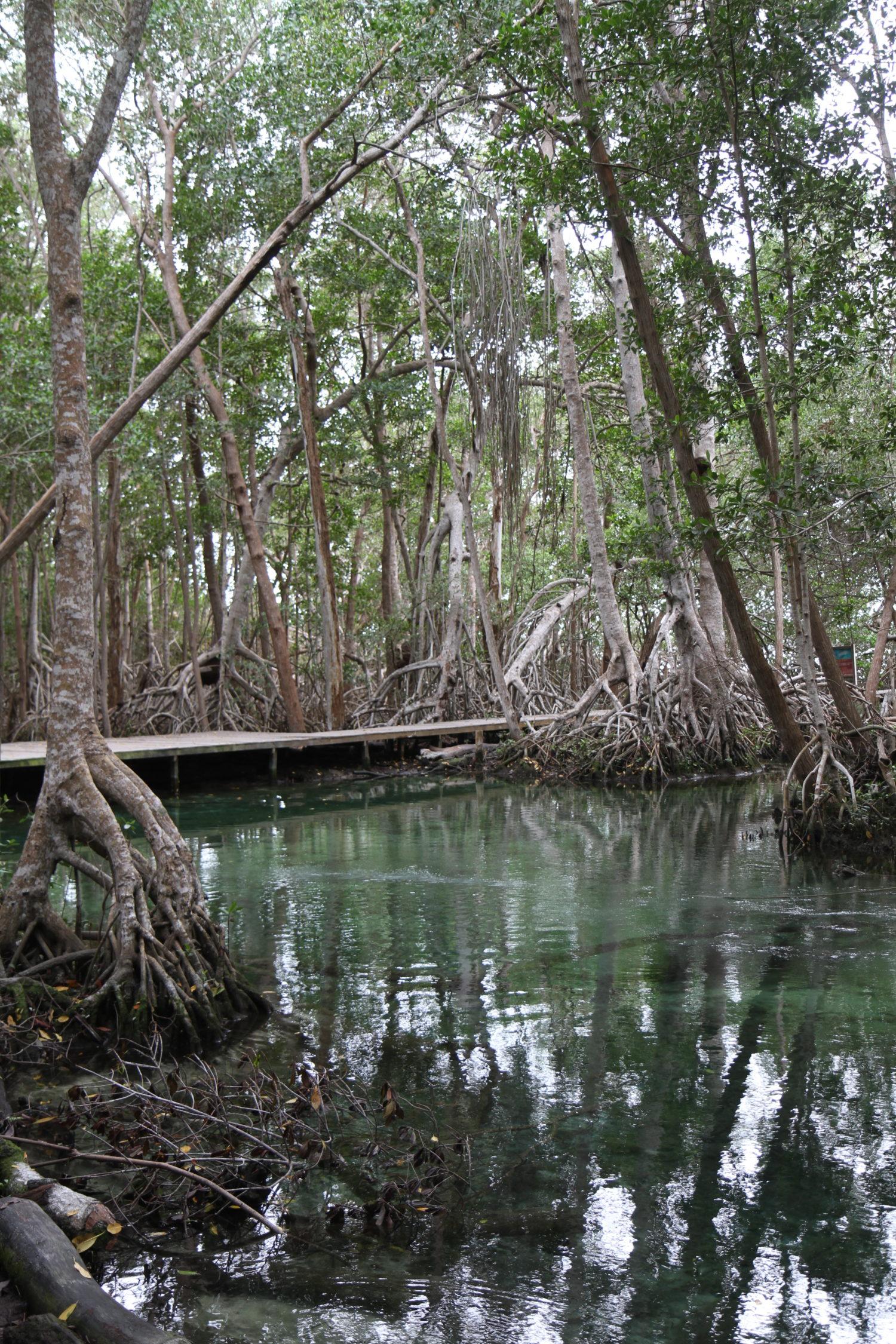 Réserve naturelle de Celestun, Ojo de agua