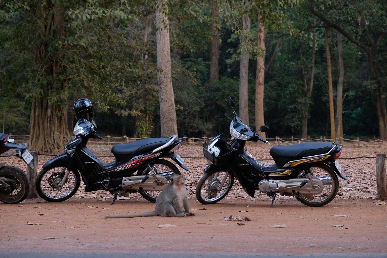 Angkor Siem Reap Cambodge