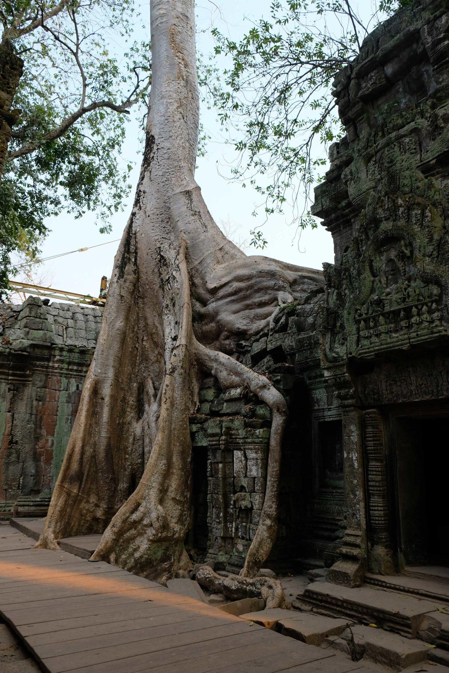 Ta Prohm Angkor Siem Reap Cambodge