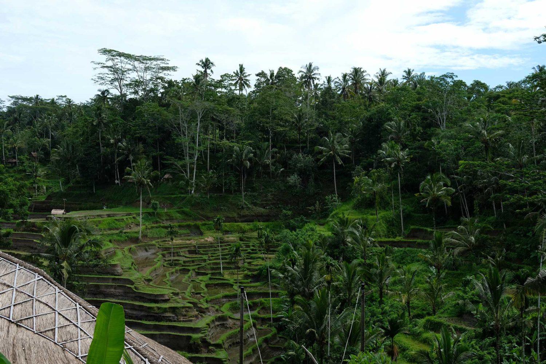 Tegallalang rizières Bali
