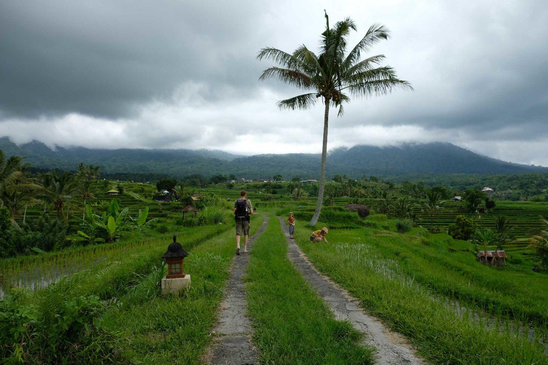 rizières de Jatiluwuh Bali