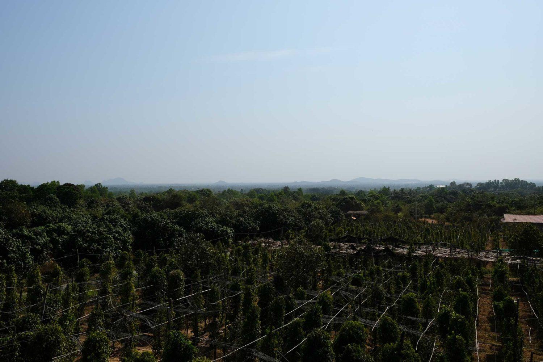 Kep Cambodge plantation de poivre